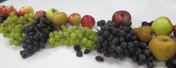 Jesen u plodovi, samo za ukras (Fotografija Božica Brkan / Oblizeki)