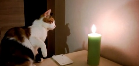 Gatos e as velas