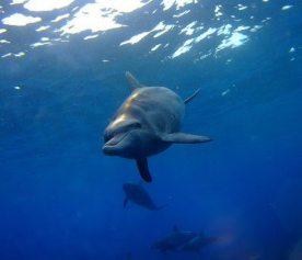 dolphinsea.jpg