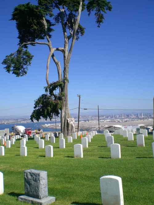 cemetery tree 02-sm