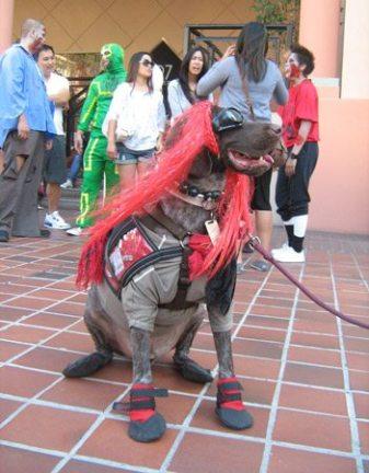 ComicCon 2011 zombie walk dog