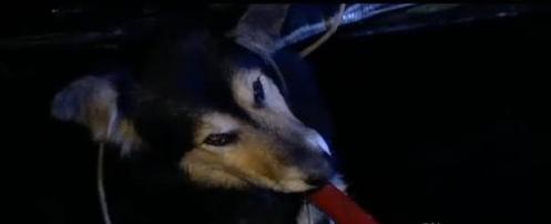 OB dog crashskatepark