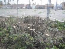 OB weedsfences 5-22-13 AppTr04