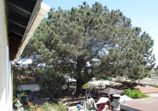 Torrey Pine Orchard mw 01
