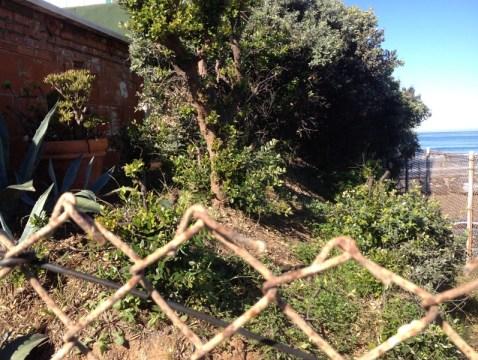 Admae bushs 02 small