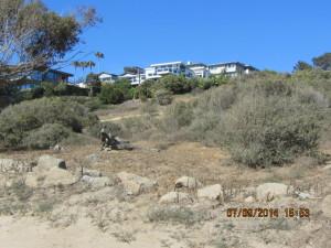 Pt Loma park hillside