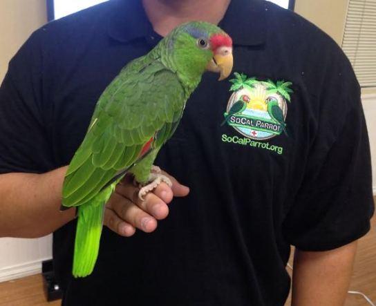 OBTC 8-27-14 parrot
