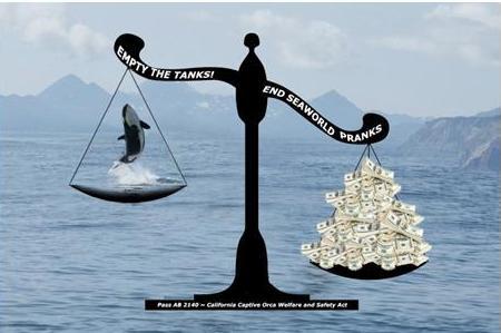 SeaWorld orca v money