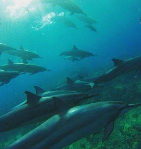 dolphin-gitmo-undersea