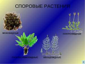 Fern växter
