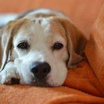 Ruhen sein Herrchen - das Hundesofa