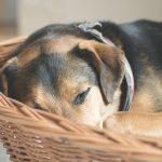 Formstabil und gemütlich: Hundekörbe