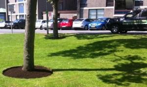 mown tree circles