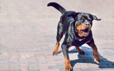 Prawo a użycie gazu pieprzowego na psa