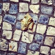 Esta foto la saqué en la plaza Woermann de Las Palmas de Gran Canaria, el día que se supo que la infanta Cristina iba a estar imputada por el 'caso Nóos'. Llovió mucho desde entonces. Estos días la imputación se ha hecho efectiva. Foto: LUIS ROCA ARENCIBIA