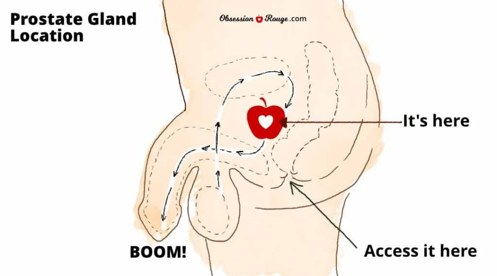 Where is the P Spot? (diagram)