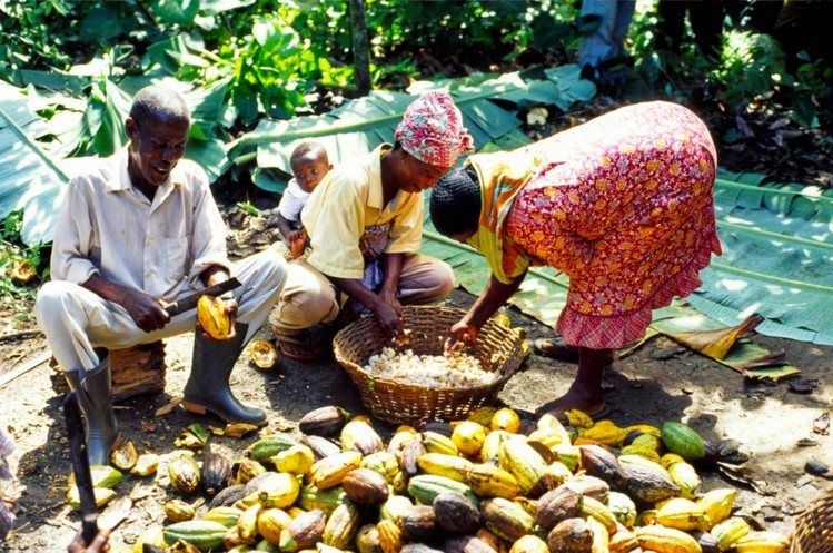 Improve livelihoods of cocoa farmers – ADI tells Gov't