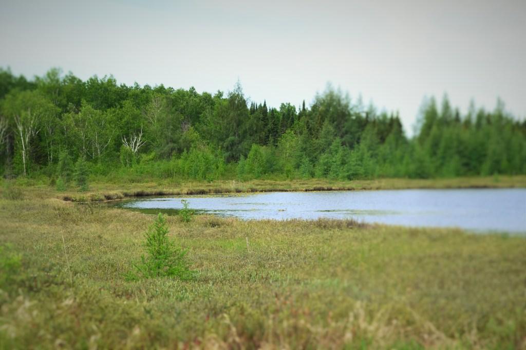 lac_tourbière_forêt_Lac_des_hauteurs