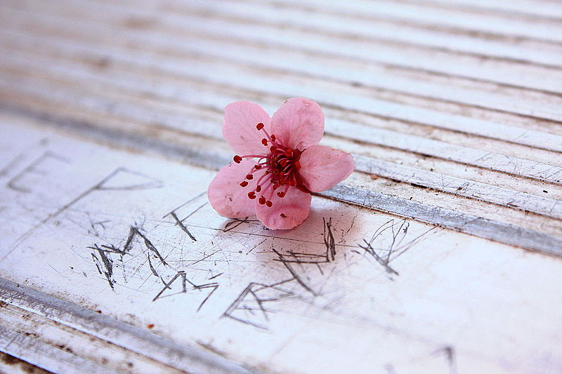 Free_Unedited_Pretty_Little_Pink_Flower_on_The_Scratched_Park_Picnic_Table_Creative_Commons_(3457443391).jpg