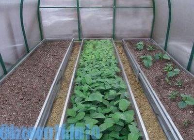 сравнение Biogrow с другими удобрениями