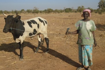 Projet d'embouche bovine pour contribuer à la résilience de 10 femmes chefs de ménages vulnérables à l'insécurité alimentaire de la paroisse de Dablo