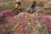 PGE : Améliorer la santé et la sécurité alimentaire des populations