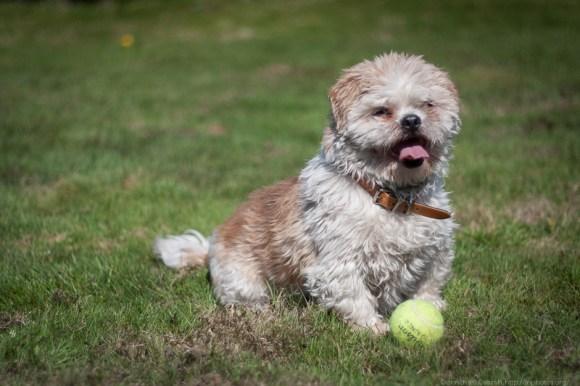 Like a dog and his ball