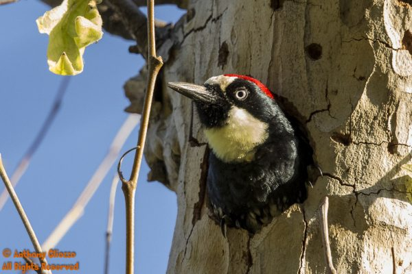Birds of Orange County  Southern California  Includes Bird Photos with Identity locations