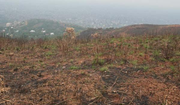 invasores-detras-de-incendios-forestales-ago-21