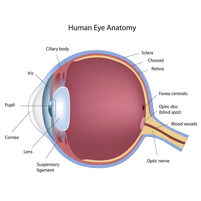 Laser Eye Treatment & Cataract Surgery | OCC LASIK