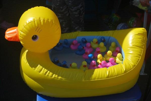 duck-15804_1280