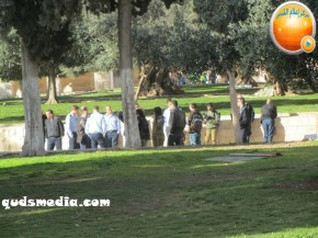 Febr 7 2013 Settlers and armed forces desecrate al-Aqsa Mosque - Photo by QudsMedia 12