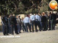 Febr 7 2013 Settlers and armed forces desecrate al-Aqsa Mosque - Photo by QudsMedia 17