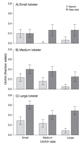 Fig 5: This figure shows the proportion of urchins fed on by lobsters, dark gray bars represent urchins from kelp forests and light gray bars represent urchins from barrens. The graphs are sorted by lobster size and urchin size.