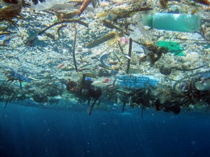 """Fig 2: An """"unnatural"""" raft composed mostly of floating plastics."""