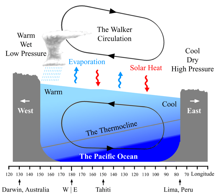 Figure 3. Cartoon schematic of Walker Circulation, a zonal (east-west) circulation cell.  Low pressure is associated with warm rising air, whereas high pressure is associated with cool, sinking air.  This configuration in the Pacific Ocean basin drives the easterly trade winds.