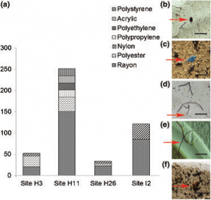 Figure 3: (A) The total number of microplastic pieces per liter of seawater from the melted ice segments according to type of plastic polymer found. Plastics are all identified by using FTIR.  (B-F) Photographs of microplastic fragments where scale bar represents 1 mm. (B) polyester, (C) polypropylene, (D) polyester, (E) nylon, and (F) polyethylene.