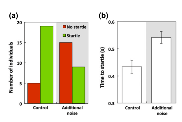 "The first graph shows the eels' reaction to a predator - would they exhibit the ""startle"" response, or would they not? In the control trails, they did, meaning they would more likely escape the predator. In the additional noise trial, they did not always show that startle response, meaning they would be less likely to escape the predator. The second graph shows their reaction time to exhibit that startle response, if they did at all. The eels in the noisy harbor simulation took longer to startle than the control treatment."