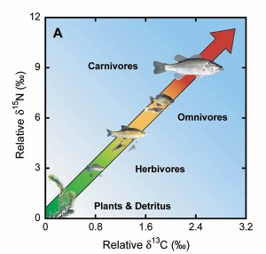 Figure 1: Using the stable isotope ratios of nitrogen (N) and carbon ( C). Credit: USGS, http://sofia.usgs.gov/publications/fs/2004-3138/