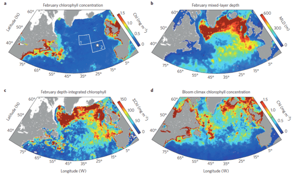 Figure 2. Phytoplankton concentration (chlorophyll) and the mixed-layer depth in the North Atlantic during winter.