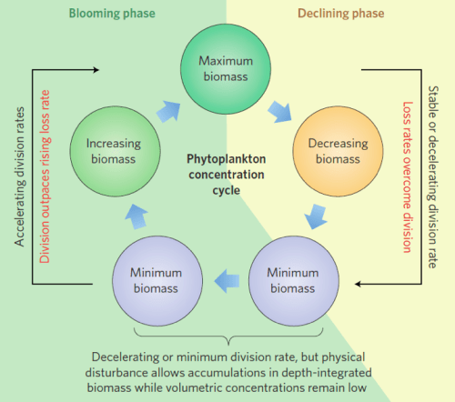 "Figure 3. Behrenfeld's framework of a phytoplankton biomass concentration cycle showing the ""disturbance-recovery hypothesis."" The green background shows increasing phytoplankton concentration and the yellow background shows decreasing phytoplankton concentration."