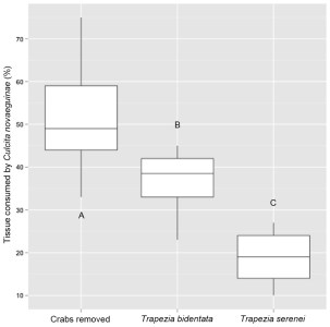 Percentage of coral tissue volume proxy eaten by C. novaeguineae in corals with guard crabs removed, with  T. bidentata and T. serenei, both of large size classes.