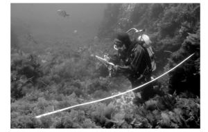 Fig. 4: A diver completing a survey.