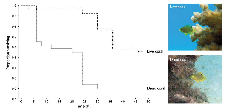 Figure 3 shows the decline in damselfish survival over time on the two different habitats—live coral versus dead coral. Fish populations on dead coral experience much lower survival and decline in population faster.
