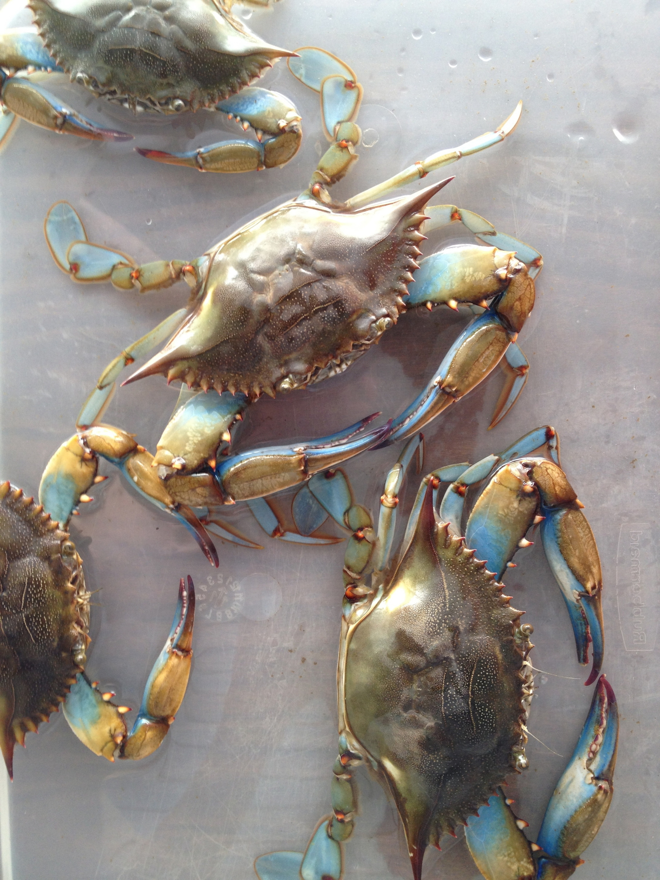 how to choose a good crab