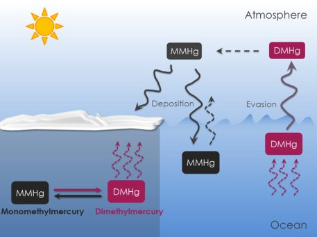 Figure 4. Cycling of MMHg and DMHg in the Arctic Marine Boundary Layer.