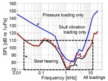 Figure 3. A predicted audiogram was produced for the fin whale calf. The lines show the minimum amplitude (or loudness, in decibels) needed for each frequency tested for the ear to pick up the sound. The solid blue line shows the fin whale's hearing using only the pressure mechanism, the dashed red line shows the fin whale's hearing with only bone conduction, and the solid black line represents both hearing mechanism.