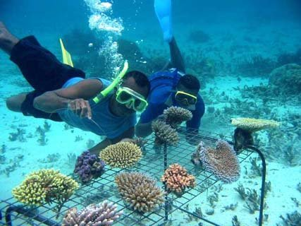 environmental effects of tourism on thai Effect of economic growth and environmental quality on tourism in southeast  in  selected southeast asian countries, namely indonesia, malaysia, thailand,.