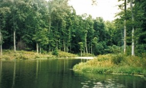A stream in the Chesapeake Bay watershed. Credit: http://www.chesapeakebay.net/images/issues/Forest_Buffers_page_image.jpg
