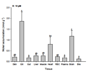 Nickel accumulation measured in different body compartments after exposure of hagfish to 10 uM nickel concentration. At all three exposure concentrations, the highest concentrations of nickel were measured in the gill, heart, and brain.